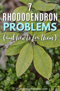 7 common Rhododren problems