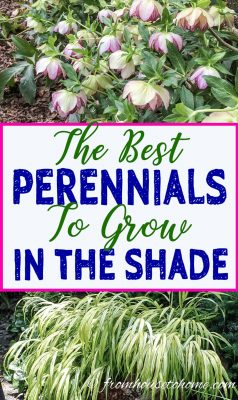 Best perennials to grow in the shade