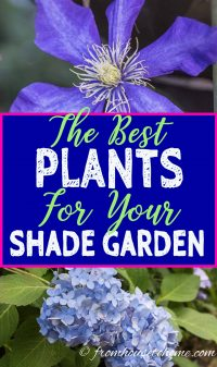 The best plants for your shade garden
