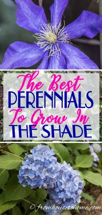 Shade plants for the garden