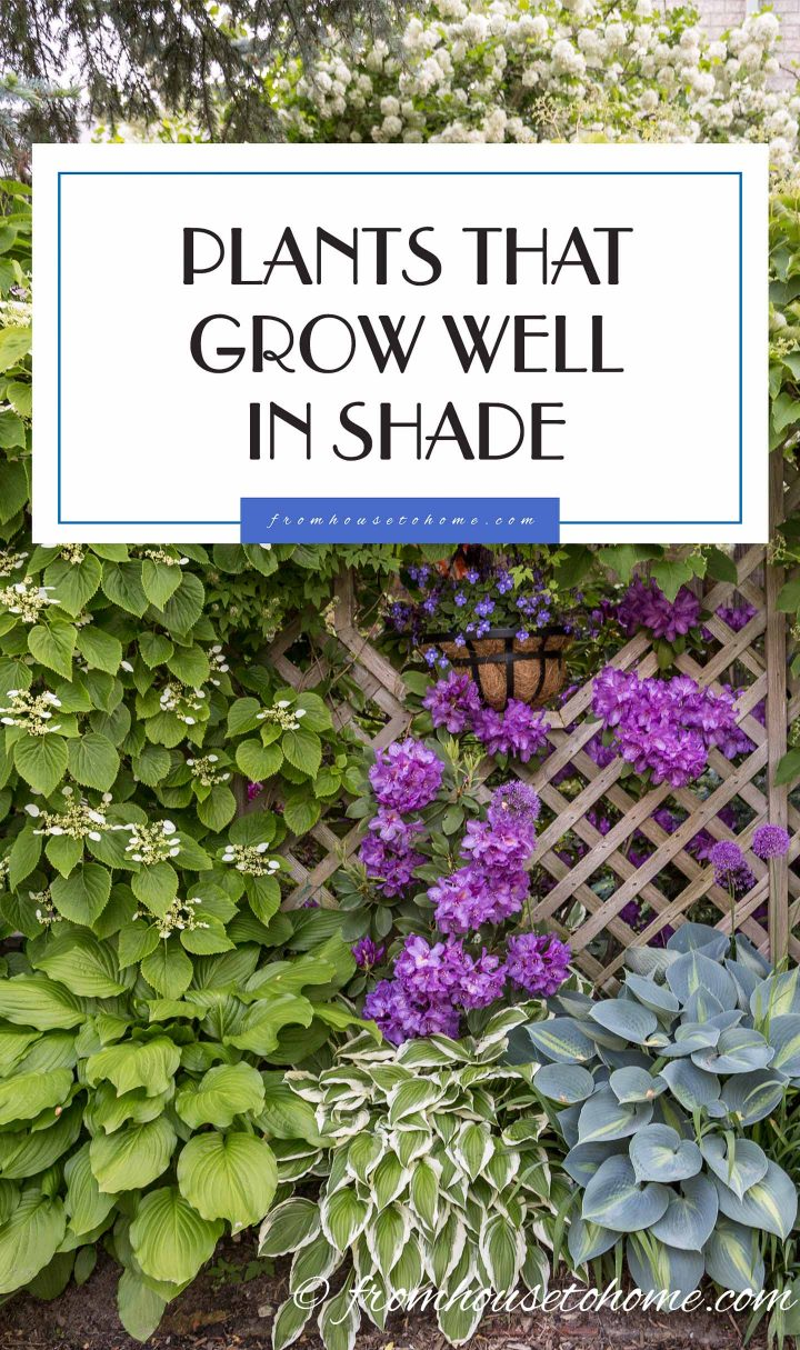Plants that grow well in shade