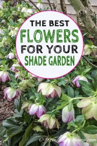The best flowers for your shade garden