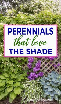 Perennials that love the shade