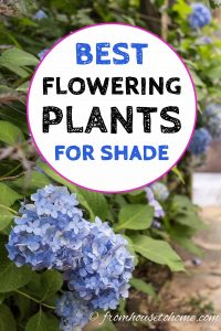 best flowering plants for shade