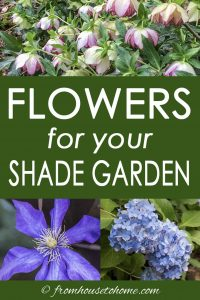 Flowers for your shade garden