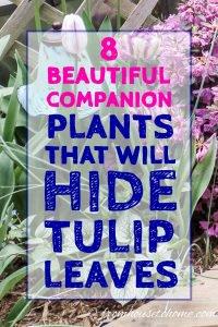 Companion plants for spring bulbs