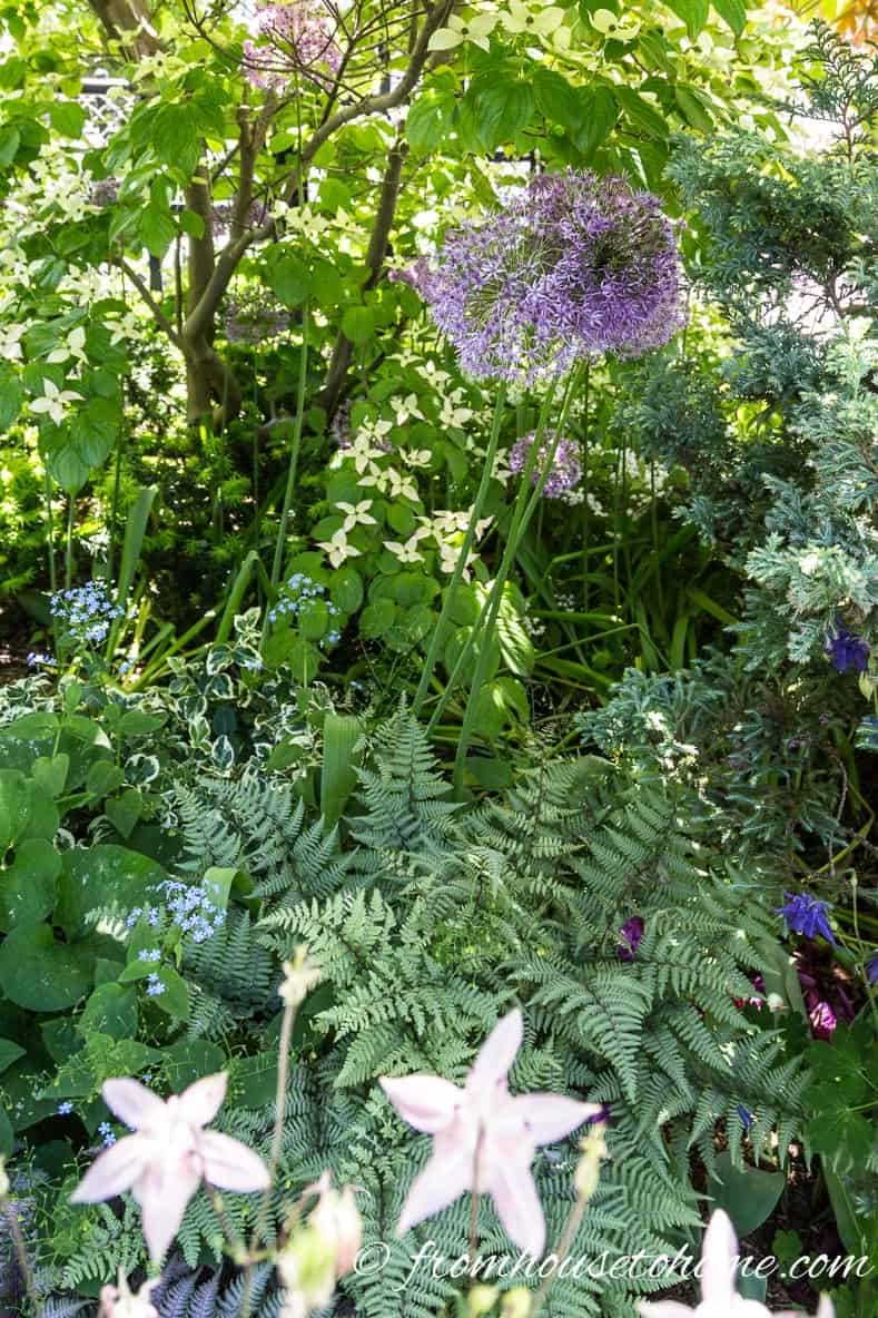 Ferns and alliums