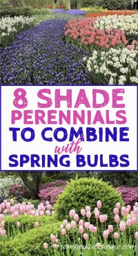 Shade perenials to plant with spring flowering bulbs