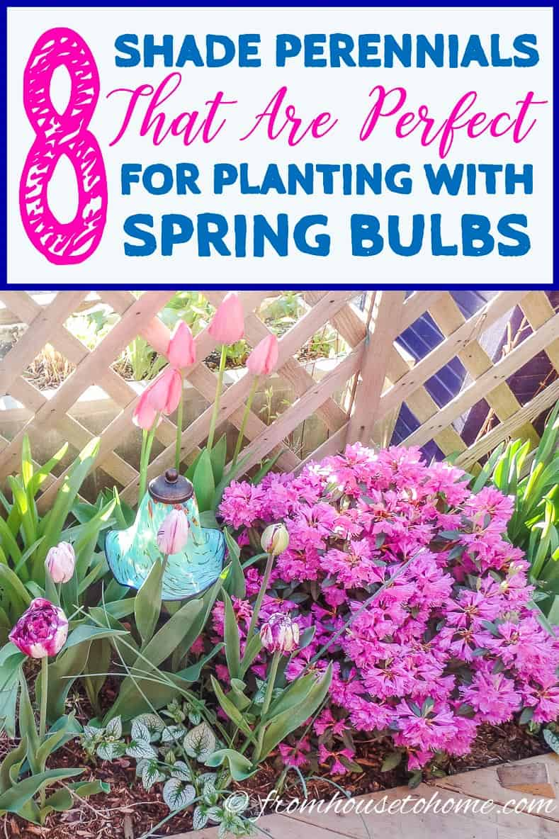 Looking for some plants that will grow in the shade and help to hide bulb foliage? This list of shade perennials to plant with spring bulbs is perfect!