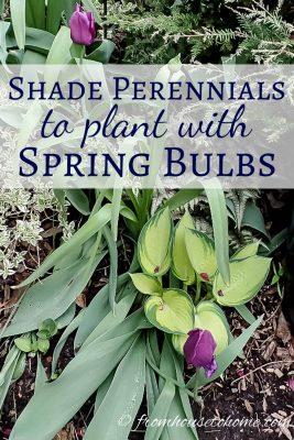 spring flowering perennials to hide tulip leaves