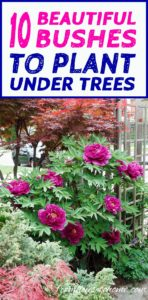 10 Shade Loving Shrubs To Plant Under Trees