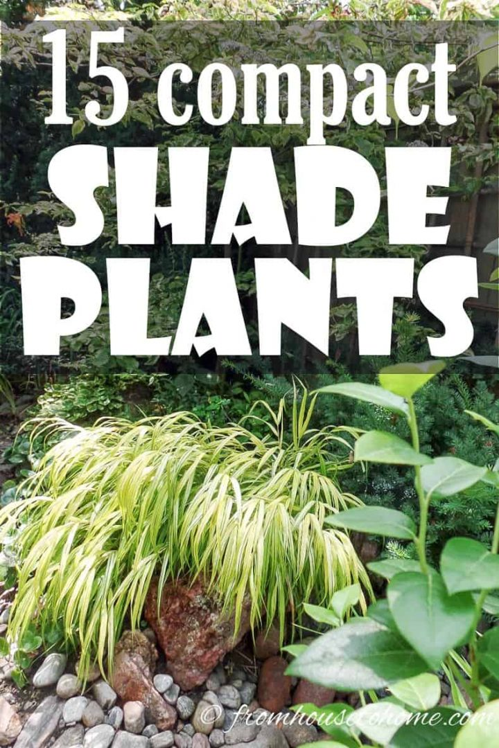 compact shade plants