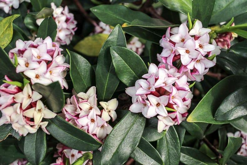 Daphne   ©c11yg - stock.adobe.com