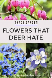 shade garden flowers that deer hate
