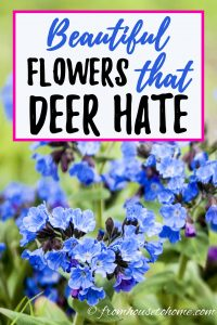 beautiful flowers that deer hate