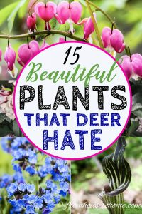 plants that deer hate