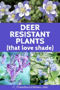 Deer resistant plants that love shade