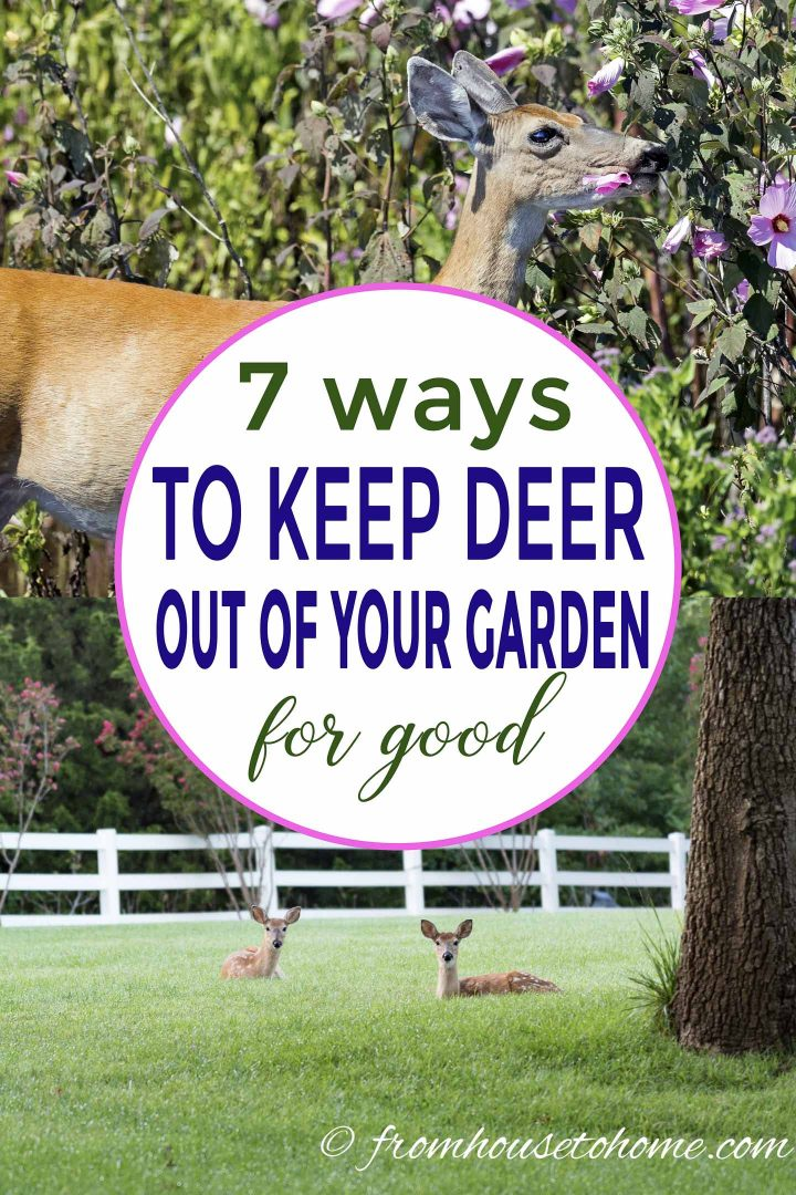 How to keep deer out of your garden for good
