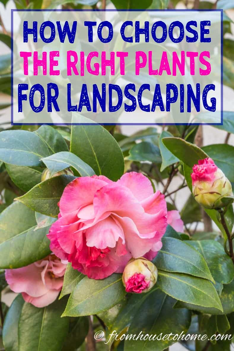 How to choose plants for landscaping your garden