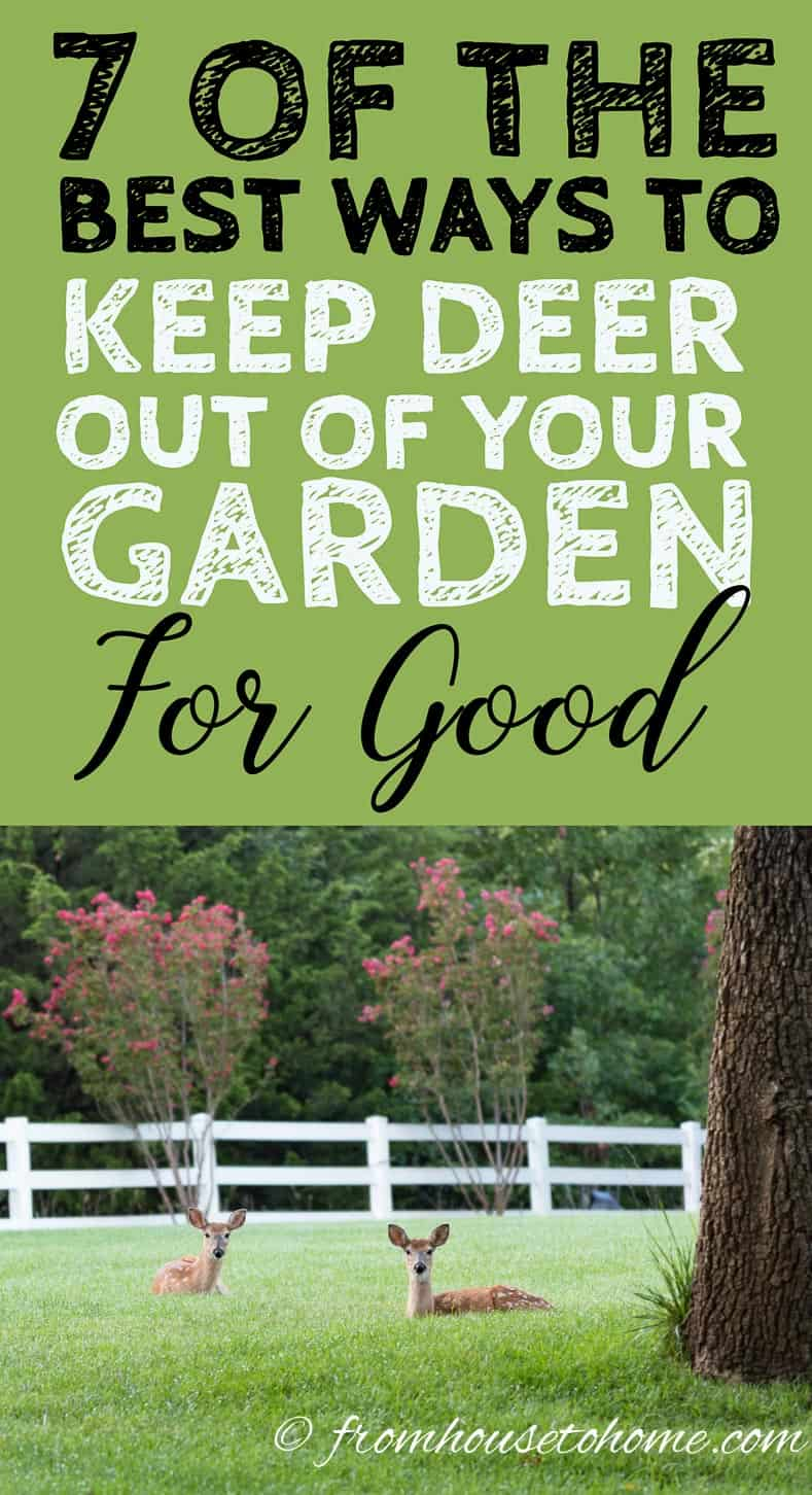 How to keep deer out of your garden © Jacob Haskew | adobe.stock.com