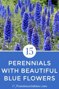 15 perennials with beautiful blue flowers