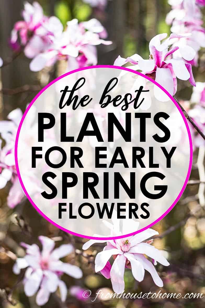 The Best Perennials And Shrubs For Early Spring Flowers