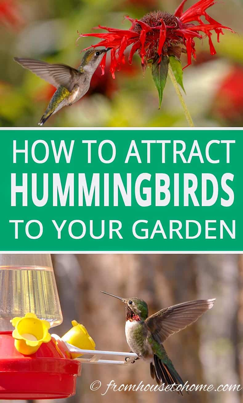 How to attract hummingbirds to your home