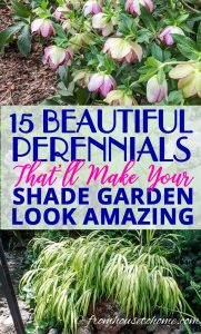 compact perennials for shade
