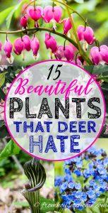 plants that deer hate