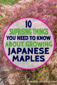 10 Things To Know About Growing Beautiful Japanese Maples