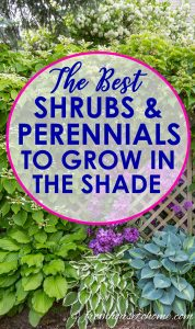 Gorgeous Plants That Grow In Shade