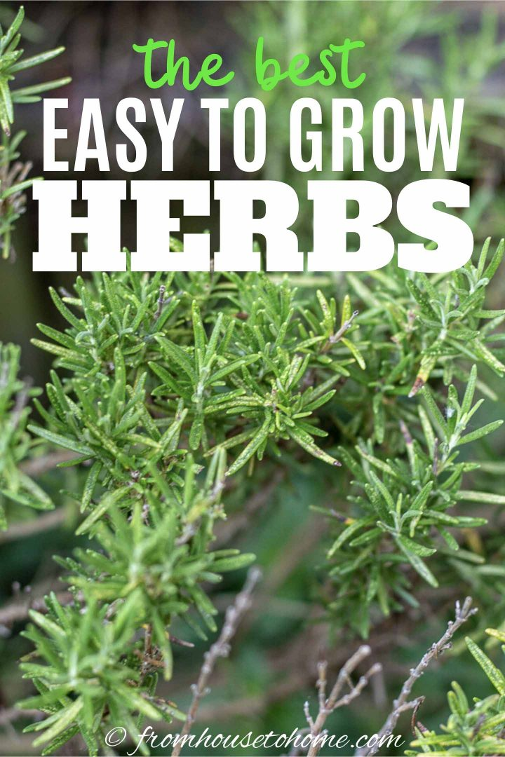 the best easy to grow herbs