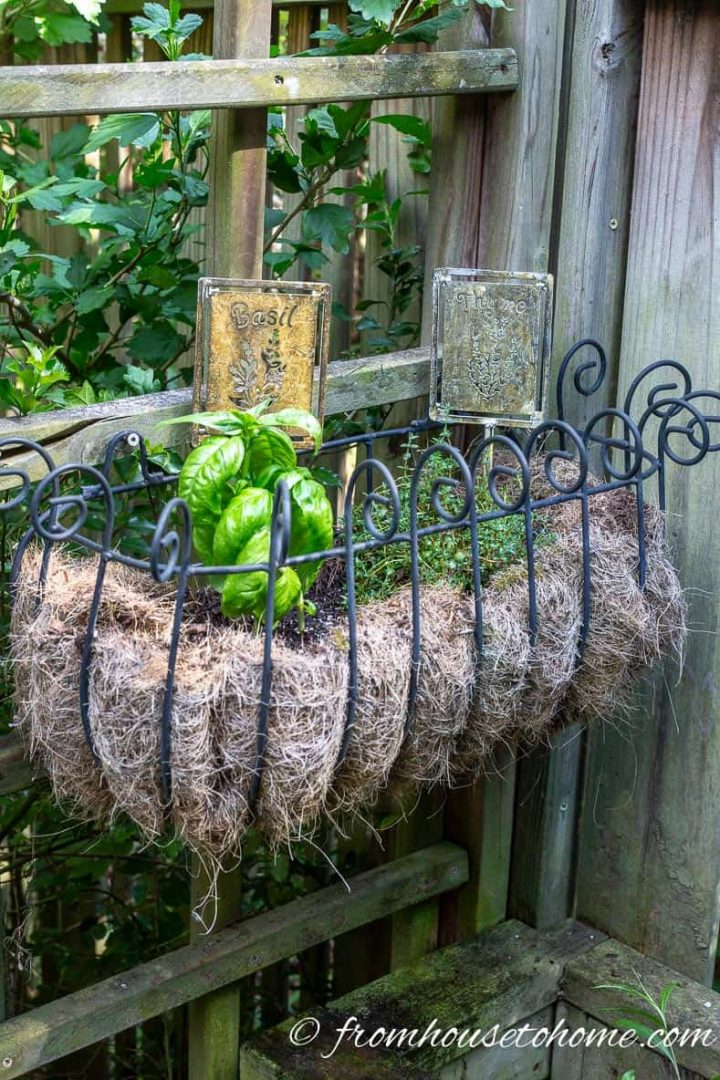 Easy to grow herbs in a planter