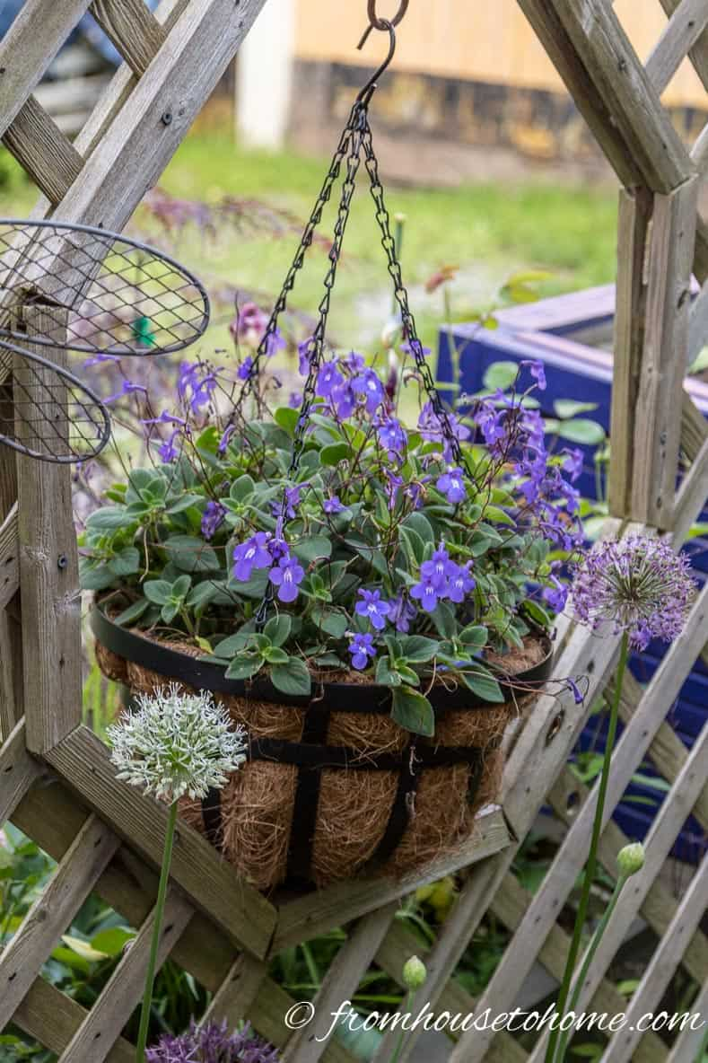 10 Best Blue Plants For Containers In The Shade