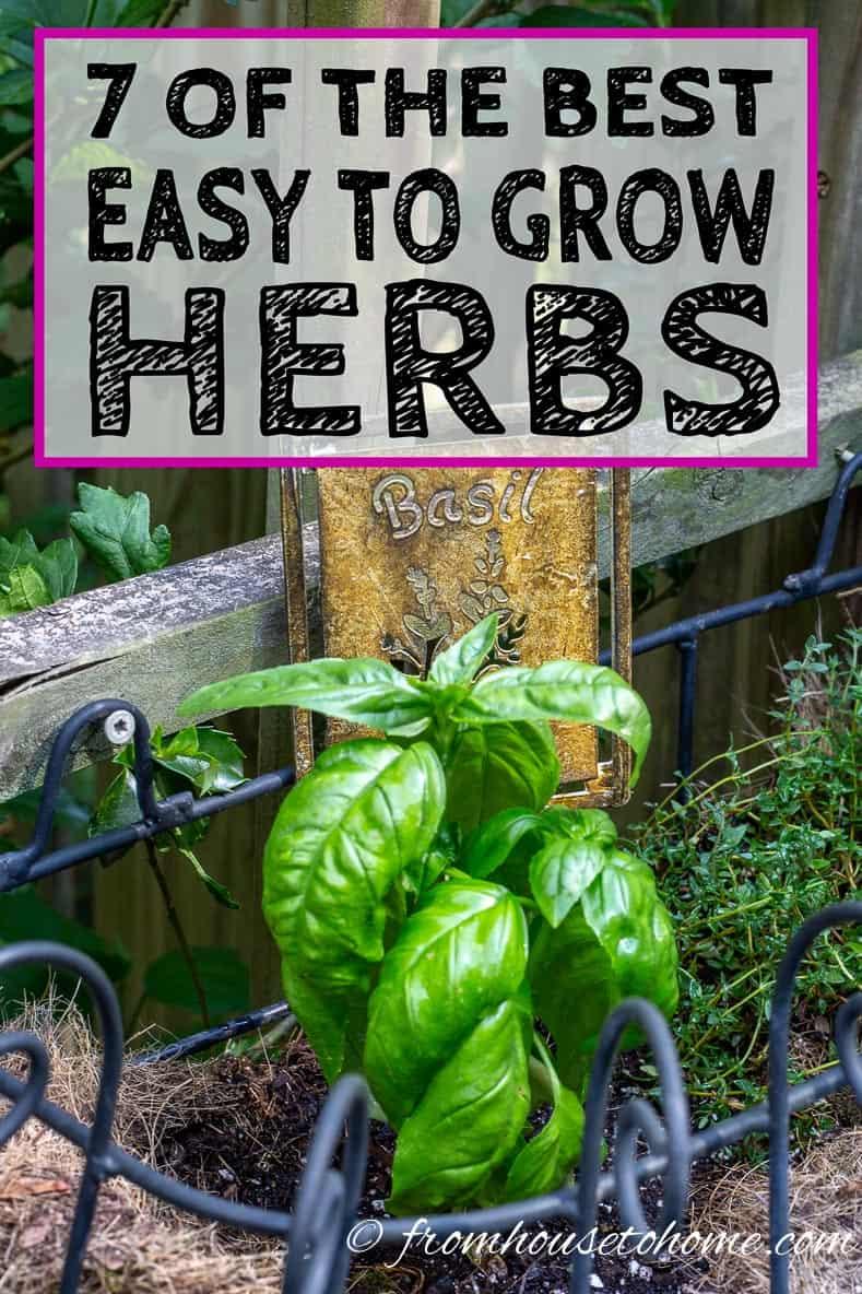 Best Easy To Grow Herbs
