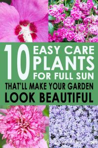 10 easy care plants for full sun that'll make your garden look beautiful
