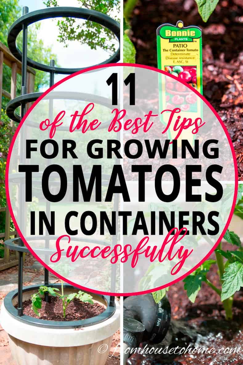 11 of the Best Tips For Growing Tomatoes In Containers With Success