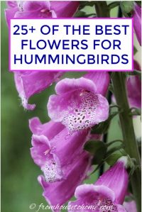 25+ of the best flowers for hummingbirds