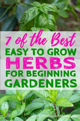 7 Easy To Grow Herbs