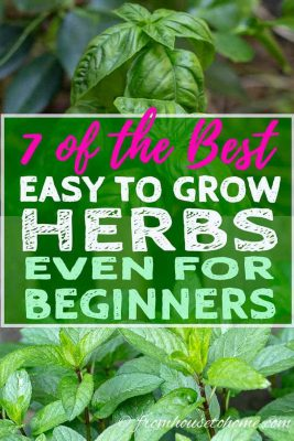 7 of the Best Easy To Grow Herbs For Your Garden
