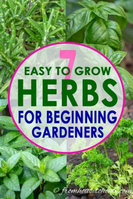 Best Easy To Grow Herbs For Your Garden