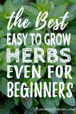 Best Herbs To Grow In Your Garden