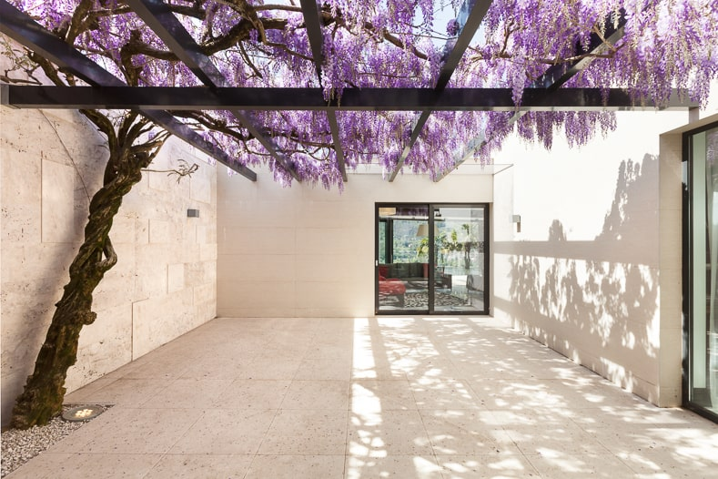 Wisteria growing over a pergola | © Alexandre Zveiger - stock.adobe.com
