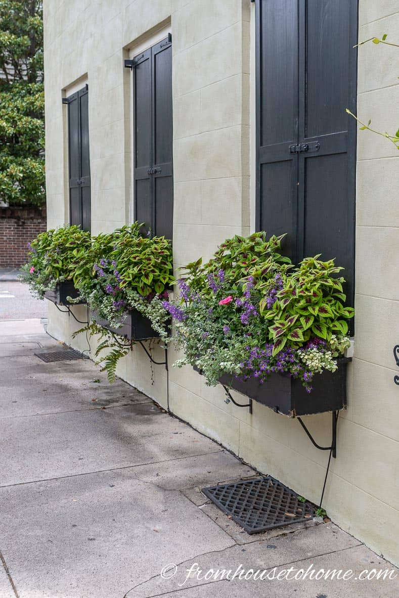 Purple and green plants in window boxes