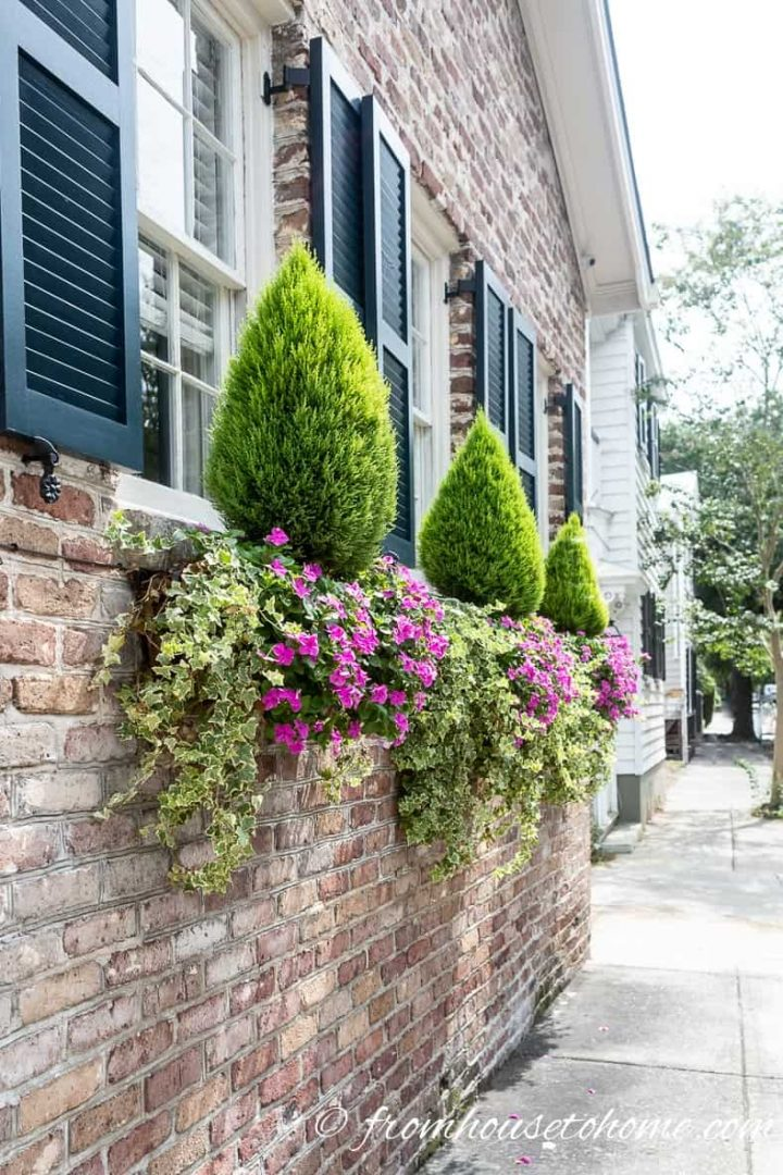Window boxes with evergreens, ivy and impatiens