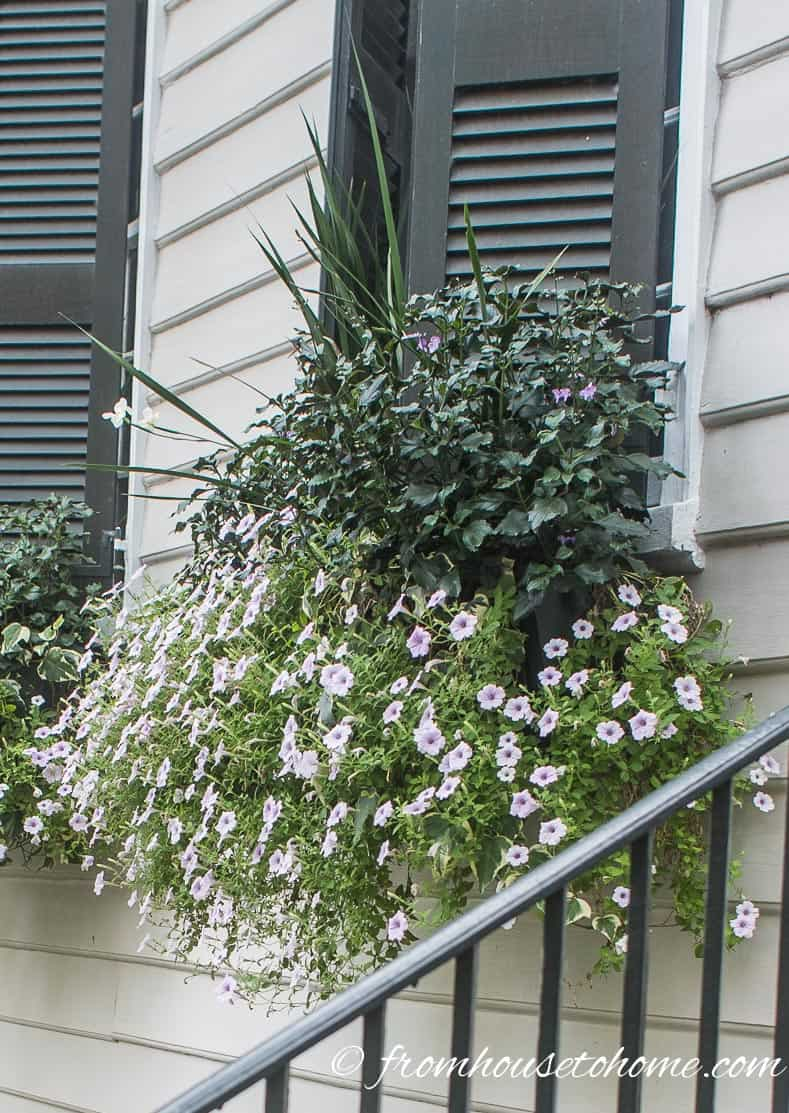 Cascading flowers in a window box