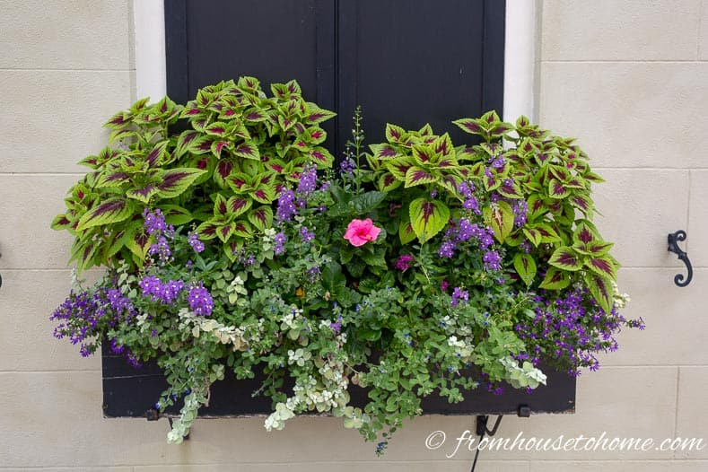 Flower ideas for window boxes