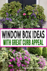 Charleston Window boxes