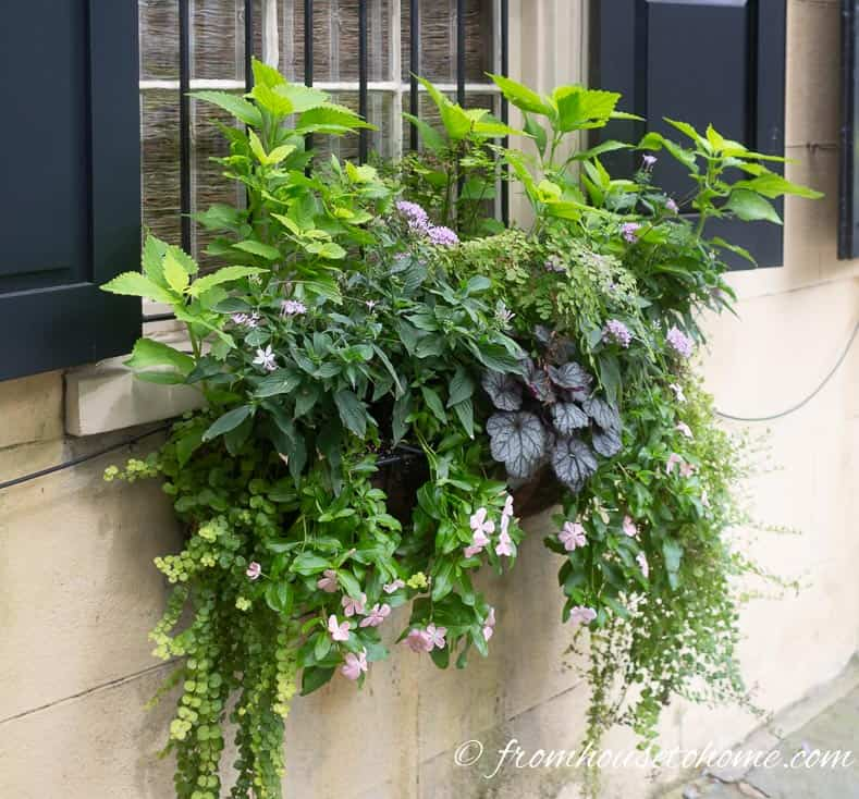 Plants for window boxes in shade