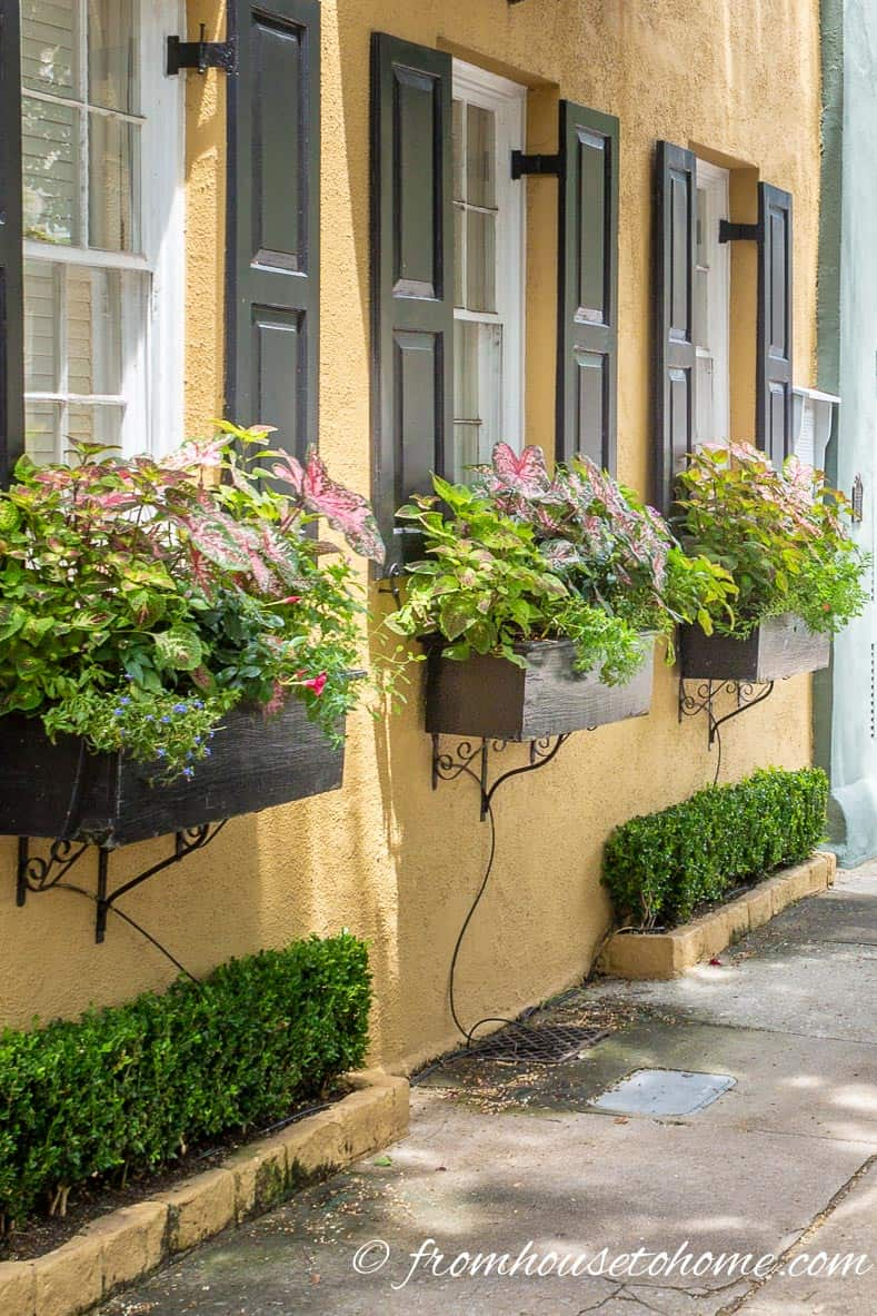 Window boxes in shade